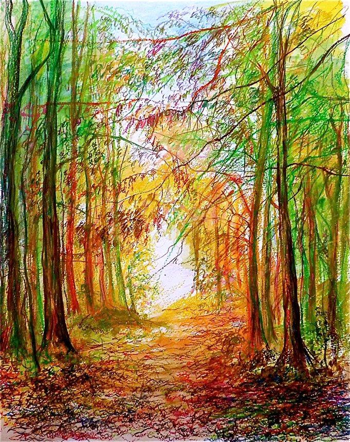 635059533837485120-inspirational-forest-walk-2